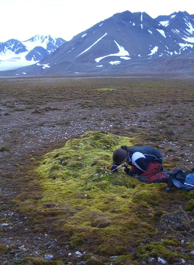 Skua mound close to Ny-Ålesund, Kongsfjord. María Luisa Ávila Jiménez using a pooter to collect Collembola from the surface of the moss.